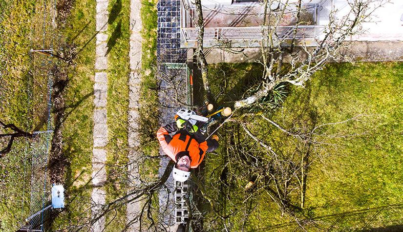 Tree Removal Companies: 4 Ways To Manage Oak Tree Acorns