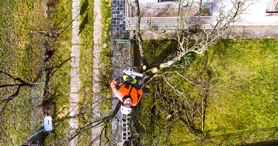 The only tree pruning guide that you need